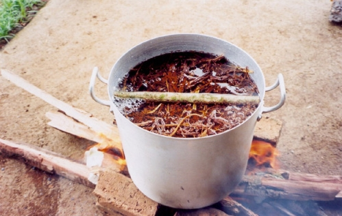 A prepared Ayahuasca brew. The strongest psychoactive herbal mixture known to man.