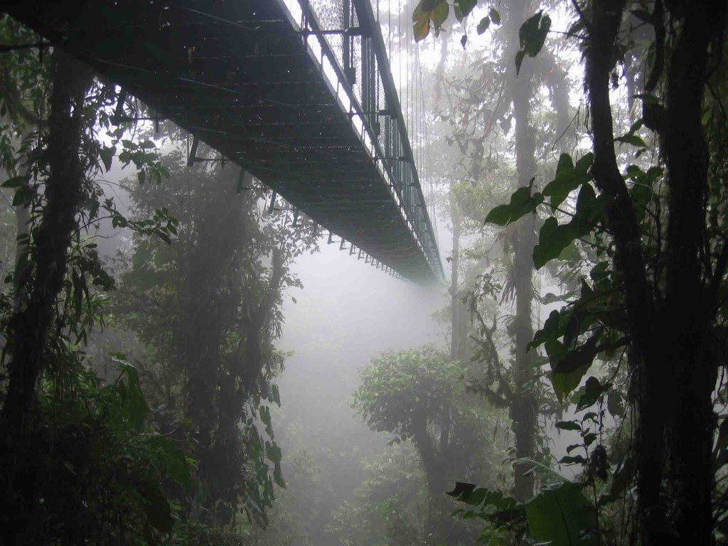 A picture of cloud forest, where Salvia divinorum is native.