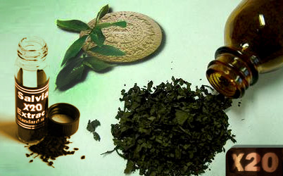 "On the picture you can see a bottle of Salvia divinorum extract, salvia leaves and a second bottle with shredded and dried salvia leaves. The label on the salvia extract bottle reads: ""Salvia 20x Extract Standardized""."
