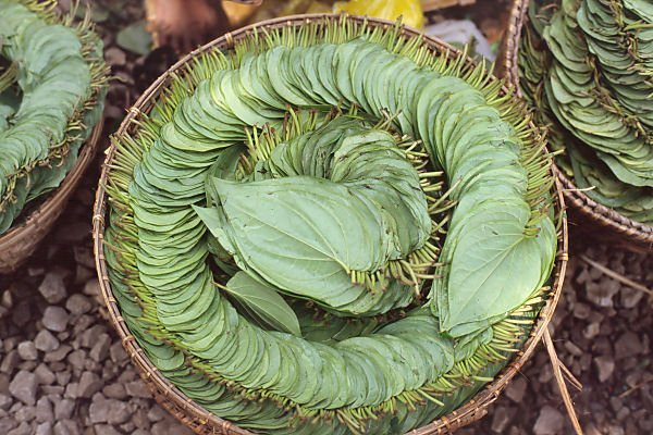 Betel pipre leaves prepared for chewing. Betel is a popular legal stimulant in Indonesia.