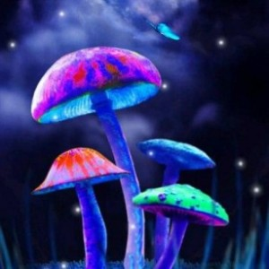 Simon's Magic Mushroom, Truffles and Grow Kits Guide