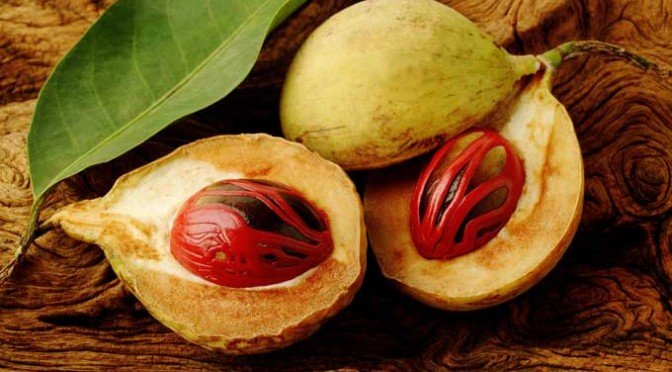 A picture of Nutmeg (Myristica fragrans)