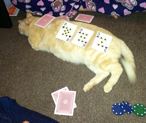 If you practice the method for counting cards discussed above, you can see that the value of the cards on the cat is +2.