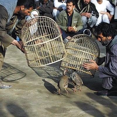 Gambling in Afghanistan
