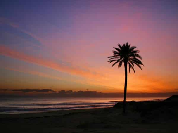 This is a picture of a palm tree at the beach in Tunisia. Tunisia is a popular tourist destination, gambling is only allowed for tourists at one of the 4 licensed casinos.